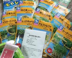 スプラウト 栽培 キット セット 種 容器 おすすめ 栽培キット 通販 送料無料 ブロッコリースプラウト かいわれ もやし 育て方