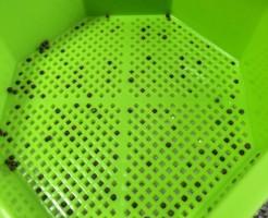キッチンファーム スプラウト 栽培容器 水耕栽培 おすすめ レビュー 穴 大きさ 網目 ブロッコリースプラウト