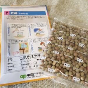 豆苗 育て方 栽培 栽培方法 作り方 種から 水耕栽培 水だけ 土を使わない 室内 卓上