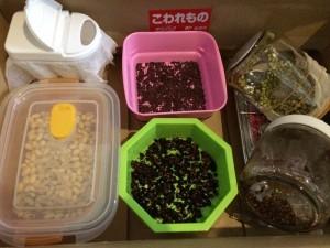 スプラウト 栽培 温室 暗室 作り方 ブロッコリースプラウト 冬 箱 暖める