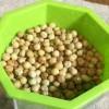 豆苗が発芽 えんどう豆スプラウトの発芽の日数は1日半 成長記録