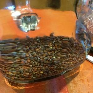 ブロッコリースプラウト 種 栽培 育て方 水に浸ける 時間 瓶 ジャー 容器 簡単 作り方