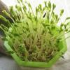 豆苗(えんどう豆のスプラウト)の栽培 緑化と100均の容器へ移植