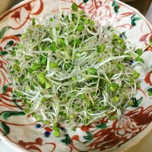 ブロッコリースプラウト はつか大根 ラディッシュ スプラウト サラダ サーモン 食べ方 生 加熱 栄養素