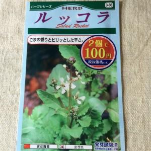 ダイソー 100均 種 野菜 ハーブ 種子 ルッコラ ロケット 栽培 育て方 家庭菜園 量