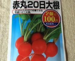 ダイソー 100均 種 野菜 ハーブ 種子 二十日大根 赤丸20日大根 栽培 育て方 家庭菜園